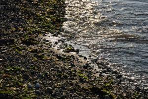 alki-beach-ebb-flowsm